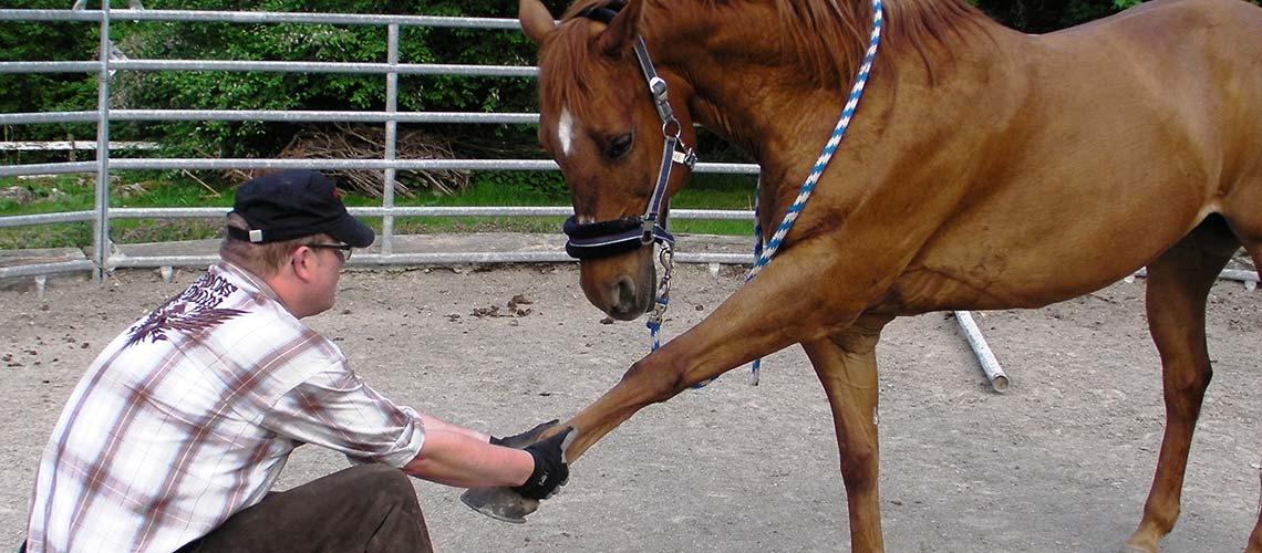 slieder-pferd-01