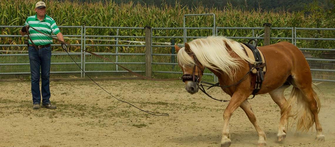 slieder-pferd-03